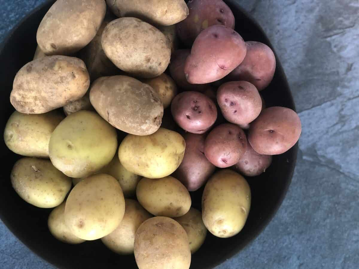large black bowl of fresh yukon gold, russet, and red potatoes